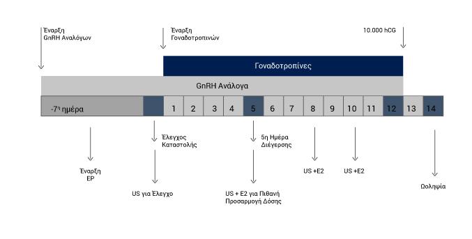 Μακρύ Πρωτόκολλο με Ανάλογα (GnRH) - Εξωσωματική Γονιμοποίηση - kalkakos.gr